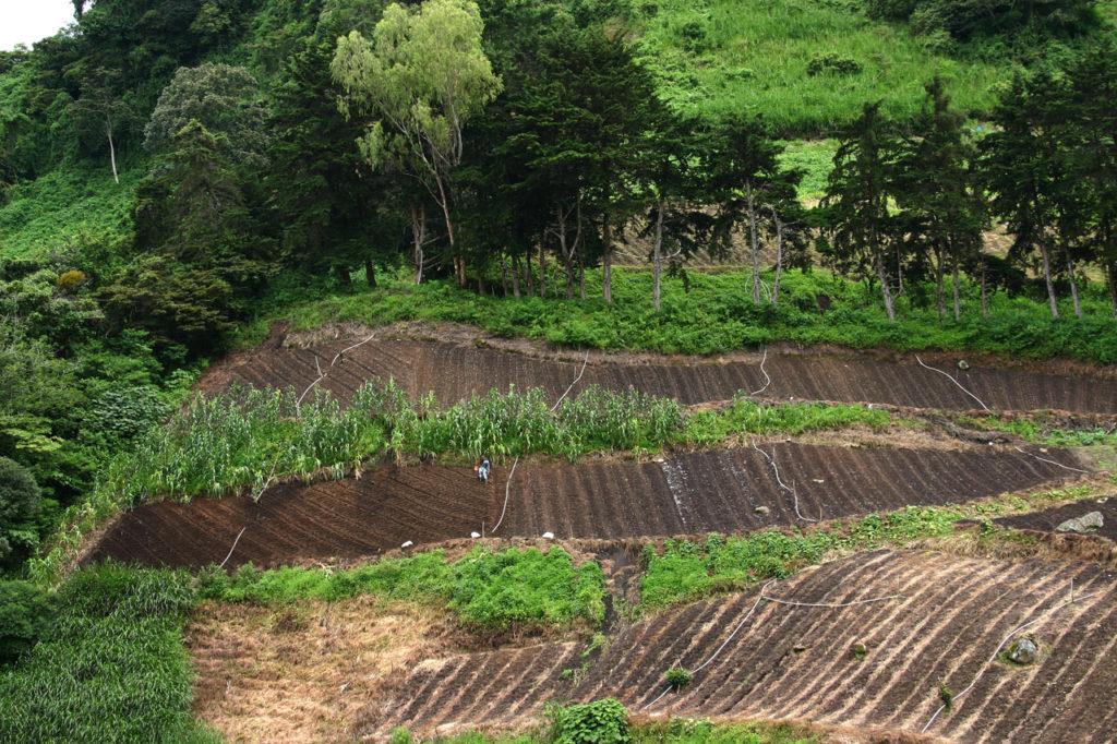 farming-in-panama-252712803156620n0h
