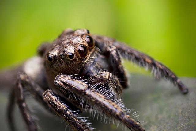spider-426927_640