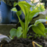 3 Tips to Keep Your Garden Growing This Summer